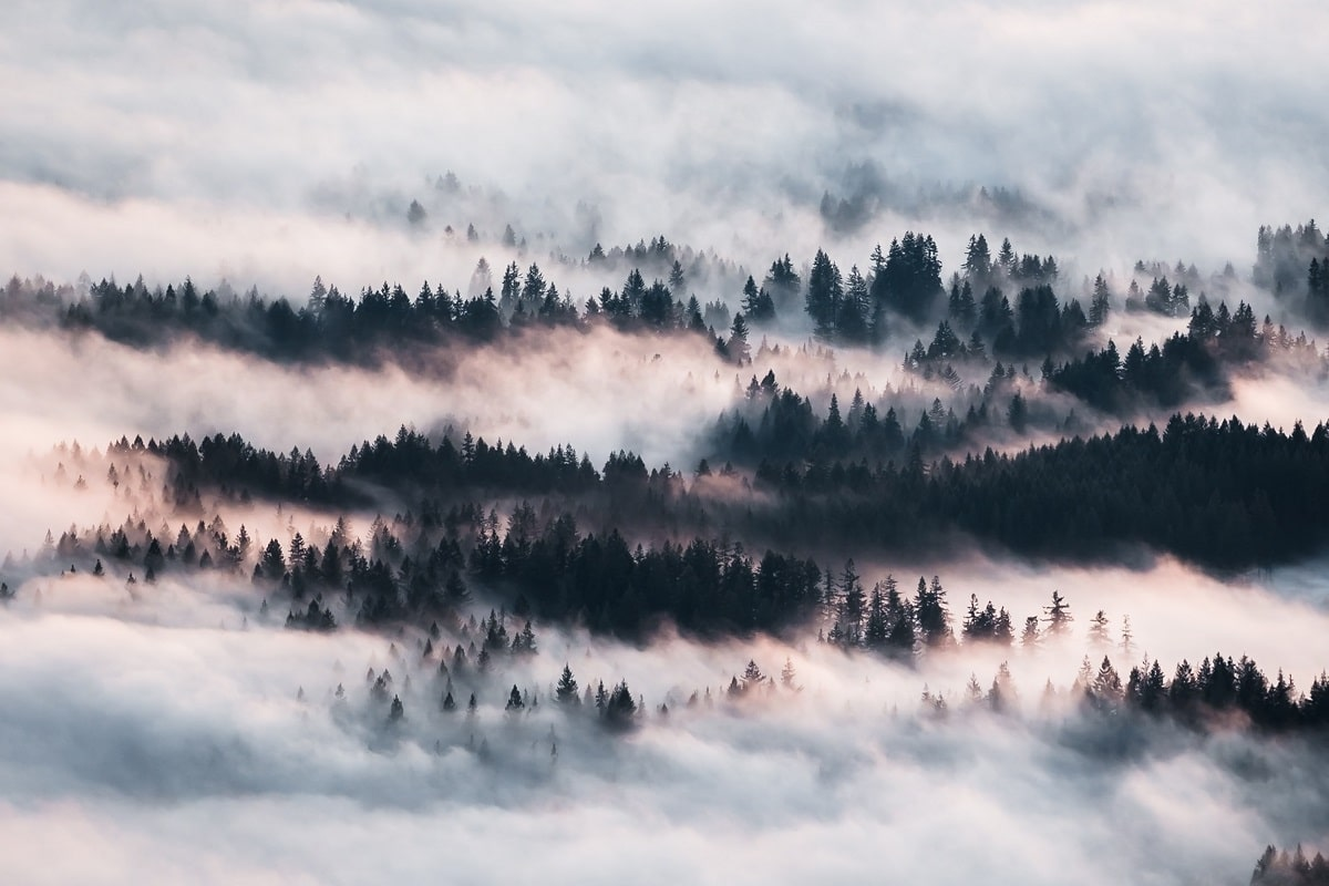 Valley of trees with heavy mists hanging over them